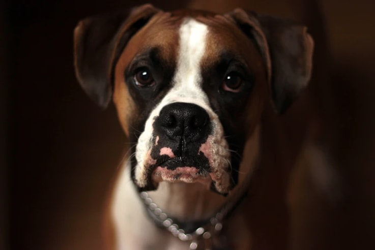 ranking karm dla psów