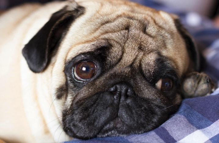 Najlepsza karma hypoalergiczna dla psa